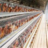 Poultry House&Chicken House&Poultry Farm chicken house